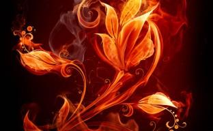 دانلود تصویر گل آتشین با کیفیت hd شاتر استوک